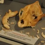 pit bull skull email size - Copy
